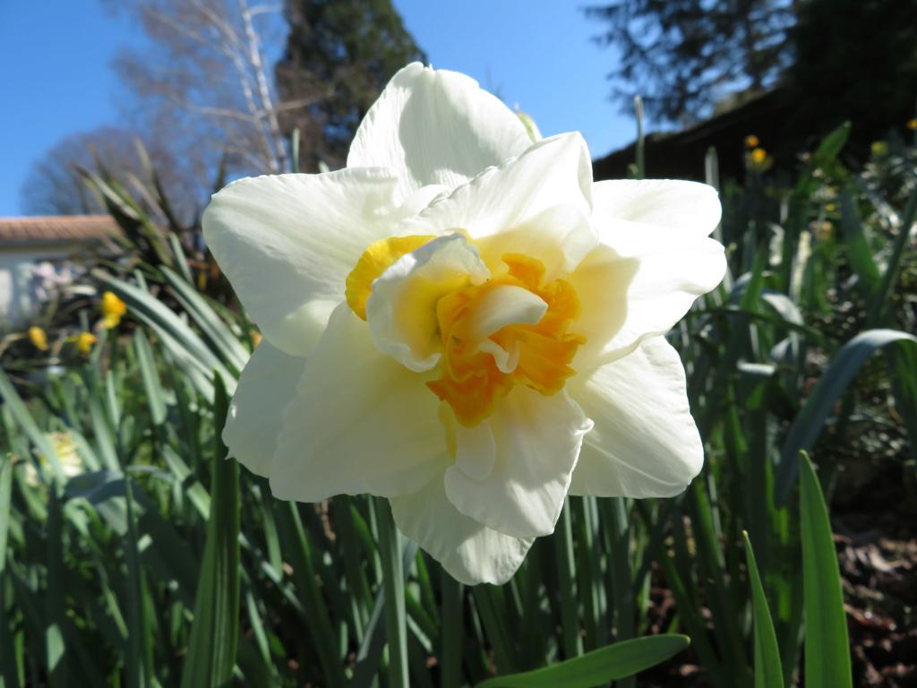 Jardin 2019 ! Narcis11