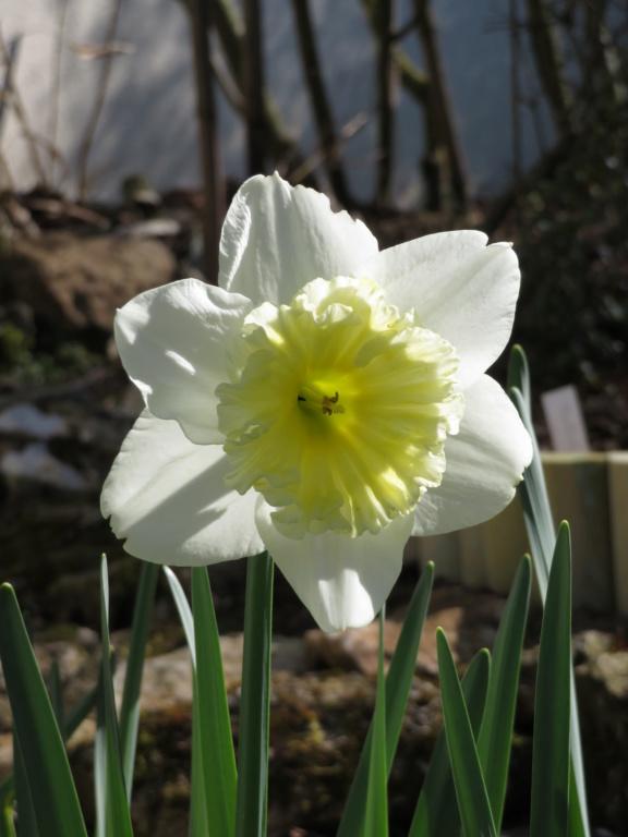 Jardin 2019 ! Narcis12