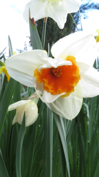 Jardin 2020 ! Narcis14