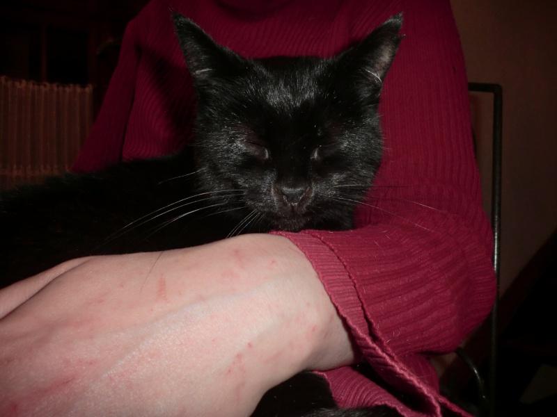 MIKO  jolie chatte noire 4 fractures du bassin a l'adoption - Page 3 Cimg0413