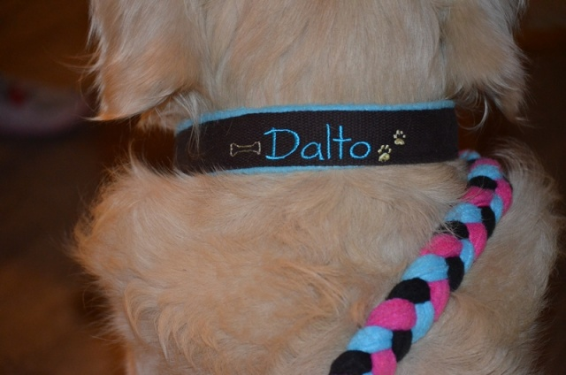 Camping Dog's - pension chien/chat Dalto10
