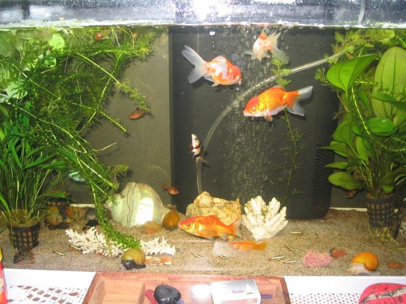 Mon aquarium Poisso10