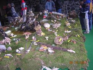 Izložba gljiva na Divčibarama i okupljanje članica foruma M_dscn10