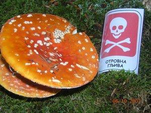 Izložba gljiva na Divčibarama i okupljanje članica foruma M_dscn11