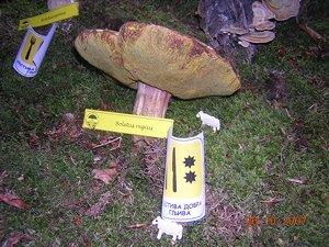 Izložba gljiva na Divčibarama i okupljanje članica foruma M_dscn12