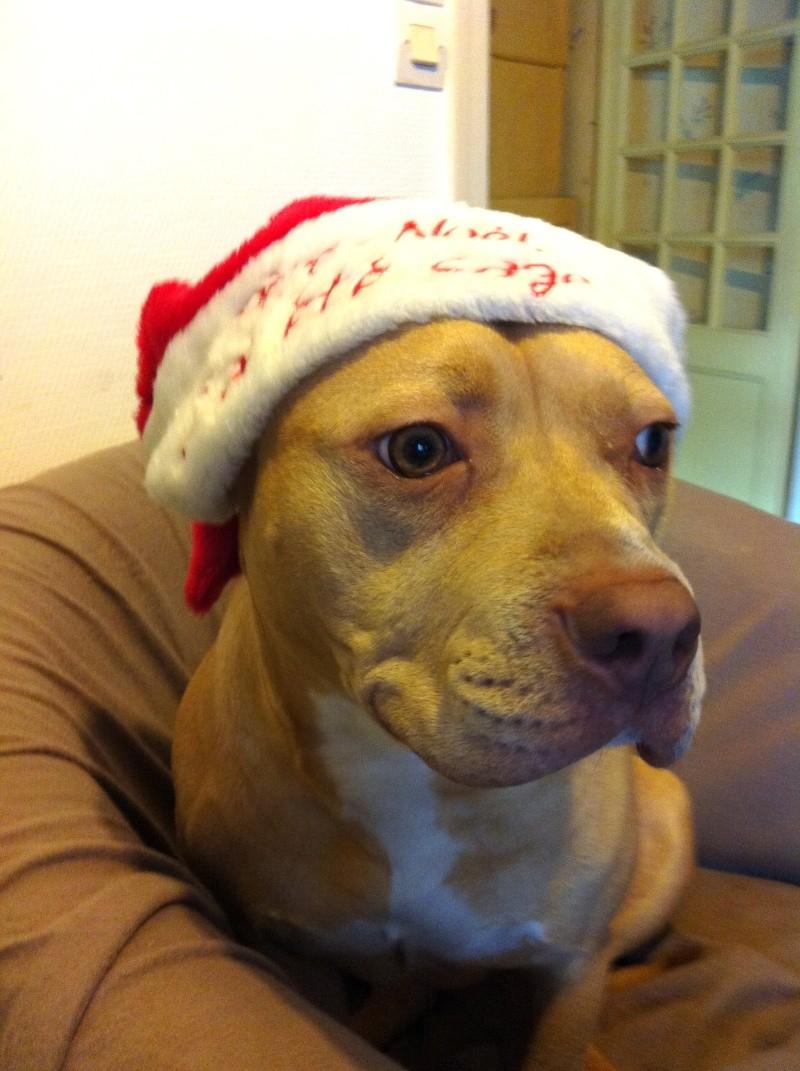 Rosie, adorable X dogue déclassée attend bon adoptant Img_6510