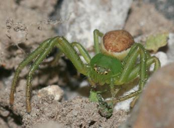 Araignée/2 Img_6315