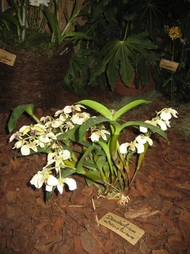 Exposition orchidées à l'école de médecine 2008 Expo_o10