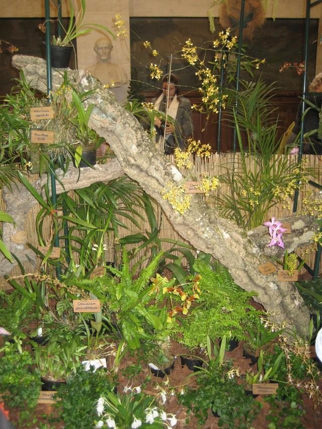 Exposition orchidées à l'école de médecine 2008 Expo_o11