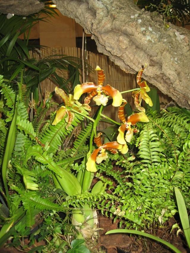 Exposition orchidées à l'école de médecine 2008 Expo_o12