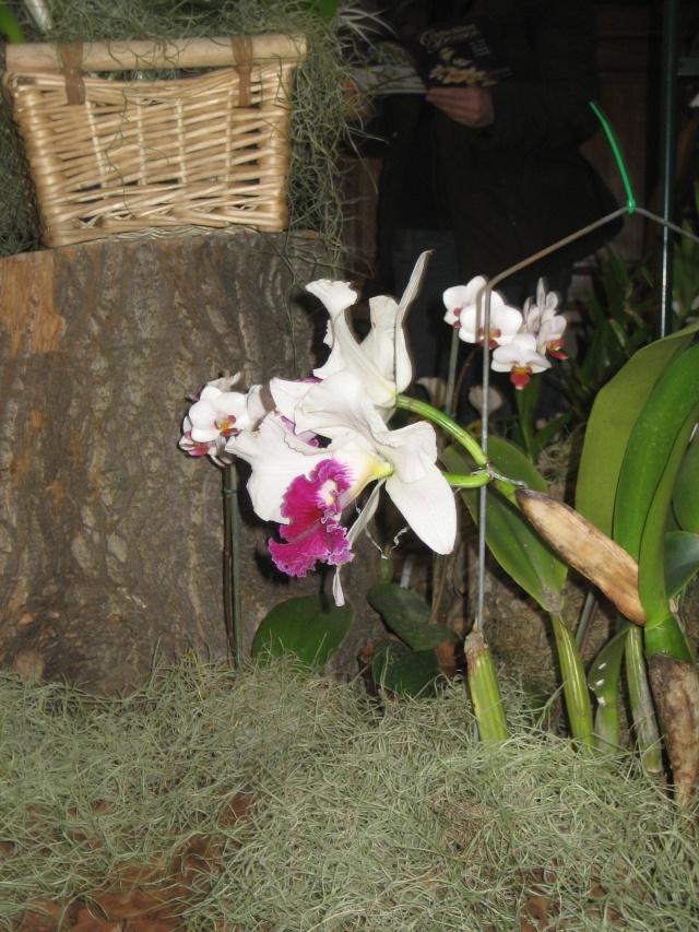 Exposition orchidées à l'école de médecine 2008 Expo_o13