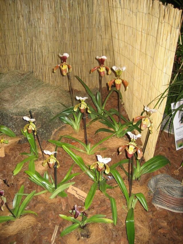 Exposition orchidées à l'école de médecine 2008 Expo_o16