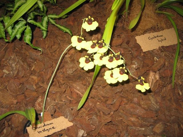 Exposition orchidées à l'école de médecine 2008 Expo_o18