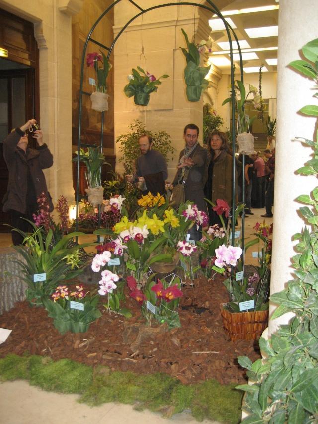 Exposition orchidées à l'école de médecine 2008 Expo_o19