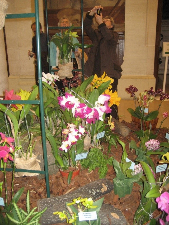 Exposition orchidées à l'école de médecine 2008 Expo_o20