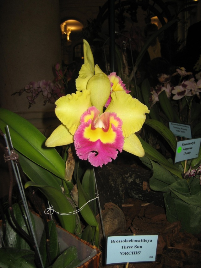 Exposition orchidées à l'école de médecine 2008 Expo_o21