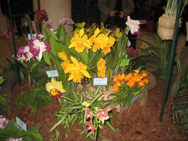Exposition orchidées à l'école de médecine 2008 Expo_o22