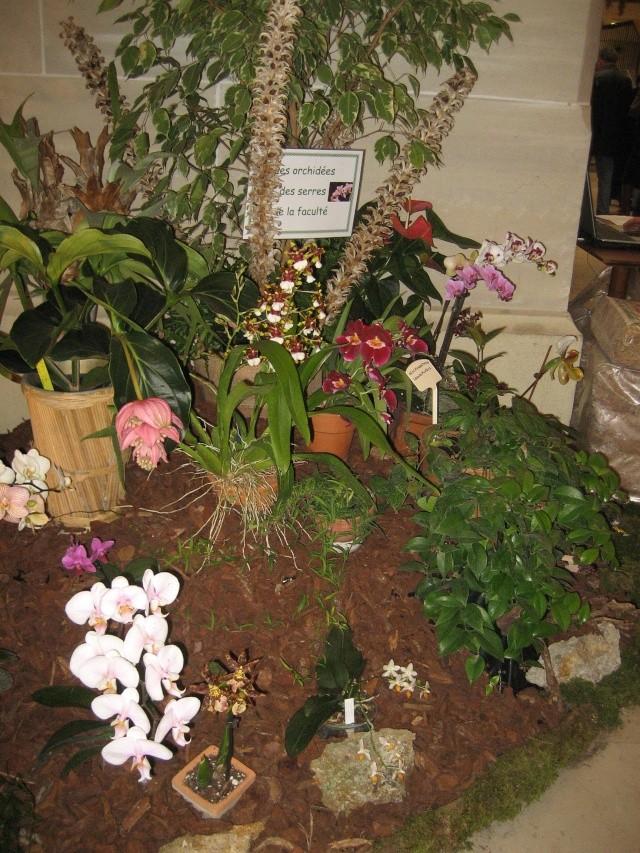 Exposition orchidées à l'école de médecine 2008 Expo_o23