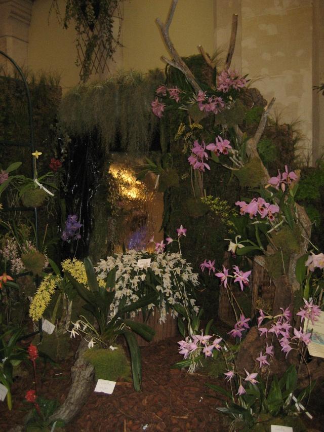 Exposition orchidées à l'école de médecine 2008 Expo_o25