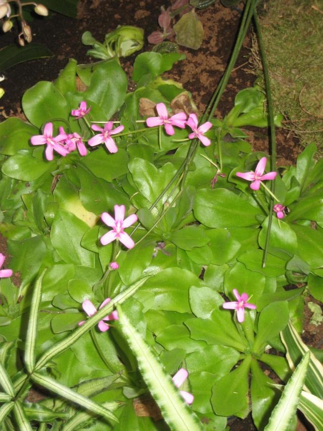 Exposition orchidées à l'école de médecine 2008 Expo_o27