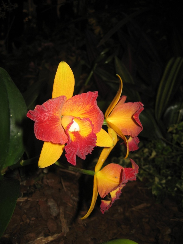 Exposition orchidées à l'école de médecine 2008 Expo_o28