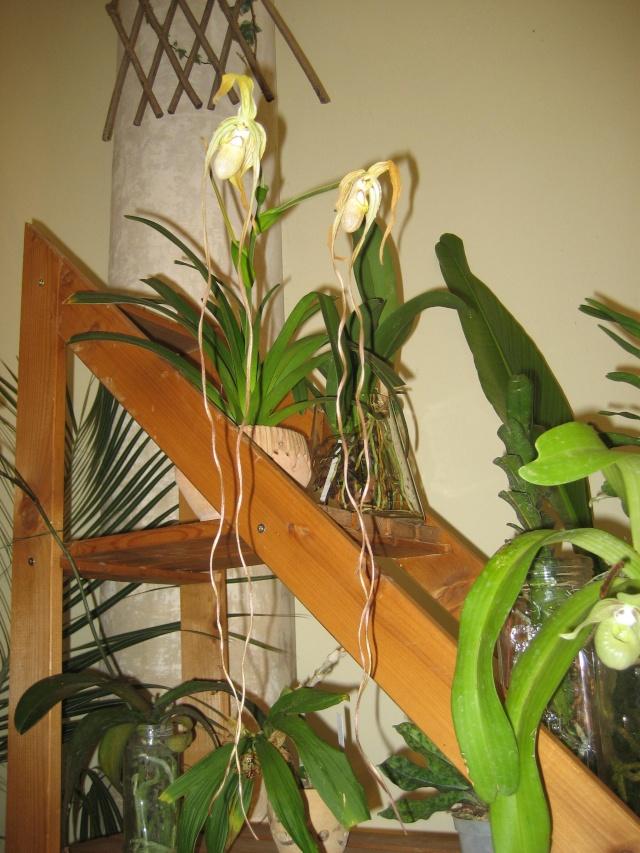 Exposition orchidées à l'école de médecine 2008 Expo_o29