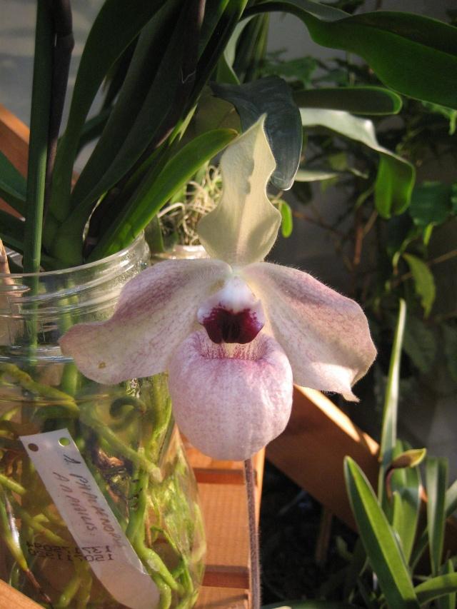 Exposition orchidées à l'école de médecine 2008 Expo_o30