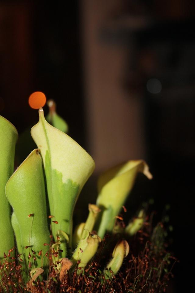 Les déformations de nos plantes Heli_p10