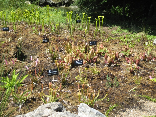 Jardin botanique d'orleans 2008 Parc_f15