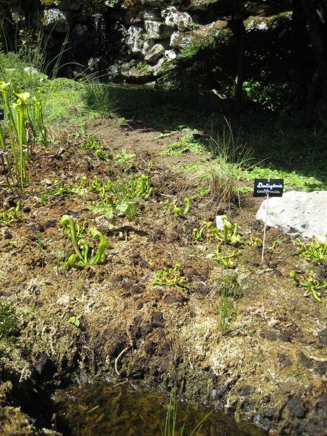 Jardin botanique d'orleans 2008 Parc_f19