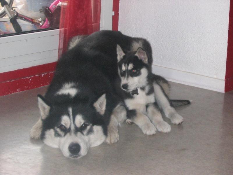 chiens d' élevage . . . - Page 2 Photo_17