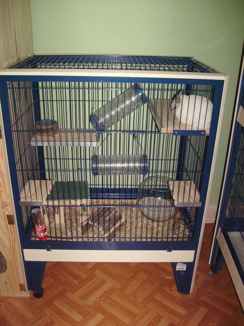 Vends cage chinchilla Imgp0013