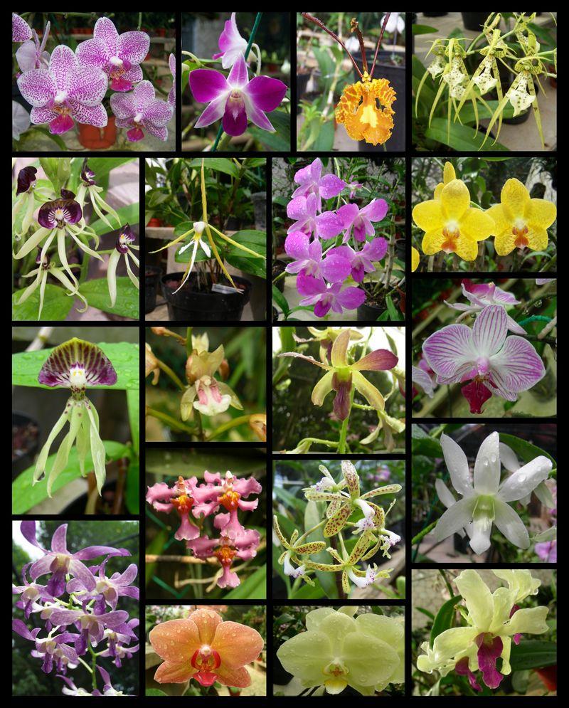 Orchidee dans un arbre Orchid10