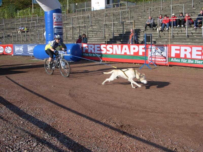 """Le team """"des chiens, des sport, une seule passion"""" Champi10"""