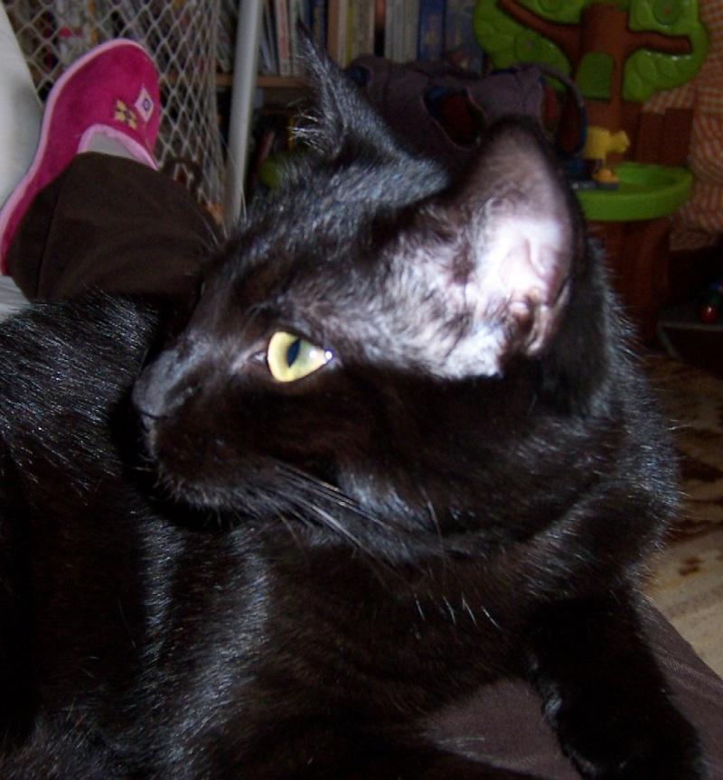 Lily, notre panthère noire.... (anciennement Lydie 2007) - Page 2 Ckoica10