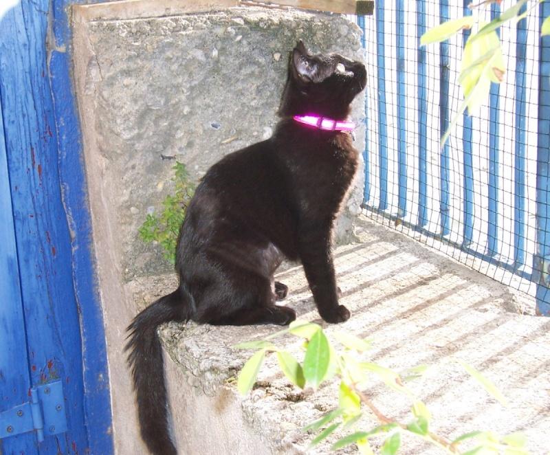 Lily, notre panthère noire.... (anciennement Lydie 2007) - Page 2 Lilych10
