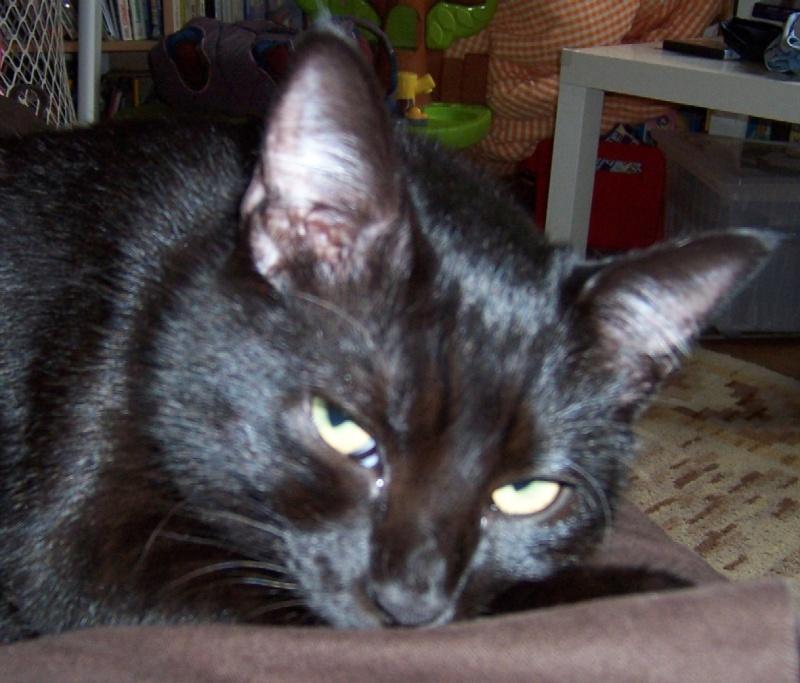 Lily, notre panthère noire.... (anciennement Lydie 2007) - Page 2 Regard10