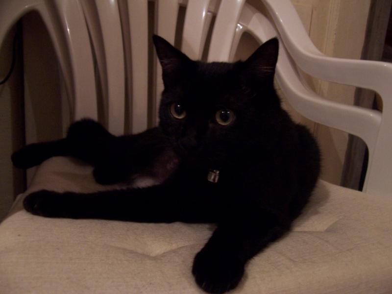 Lily, notre panthère noire.... (anciennement Lydie 2007) - Page 2 Sphinx10