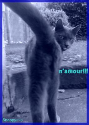 Les Chats à lilie 10149010