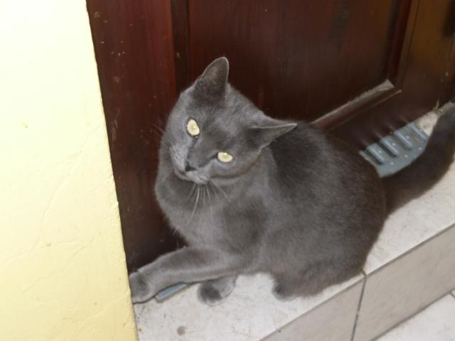 Les Chats à lilie P1000210