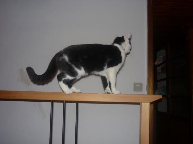 Les Chats à lilie P1000415