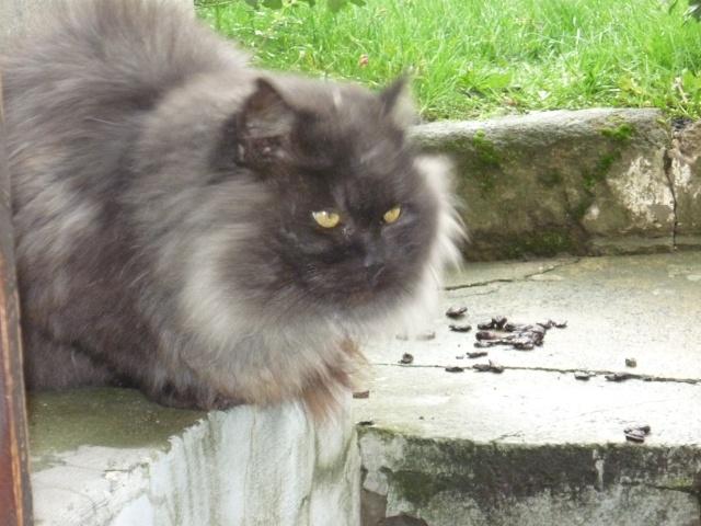 Les Chats à lilie P1000610