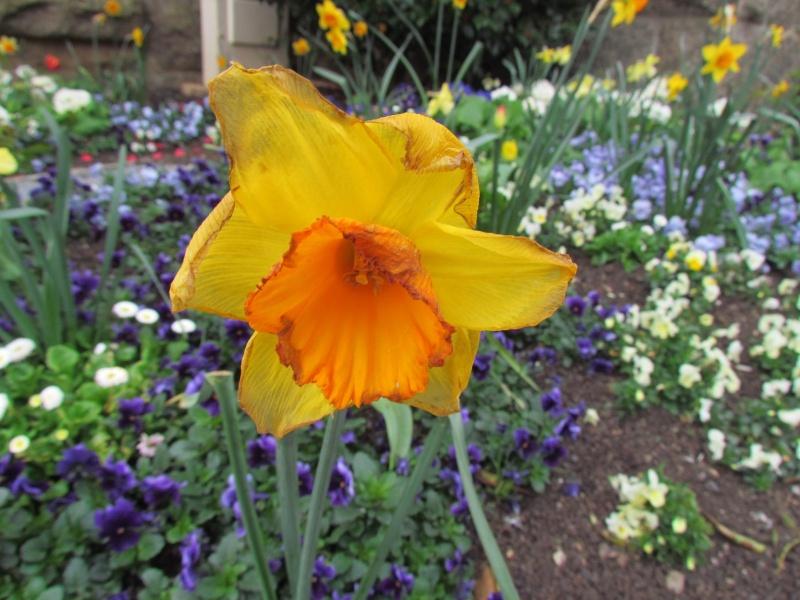 Toutes les fleurs de couleur jaune - Page 2 8210