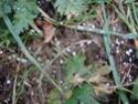Le temps à Madelonnet du mois de novembre 2007 2007_109