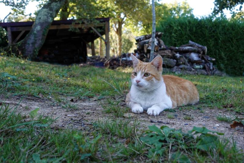 Mon chat (quel regard) Chat1011