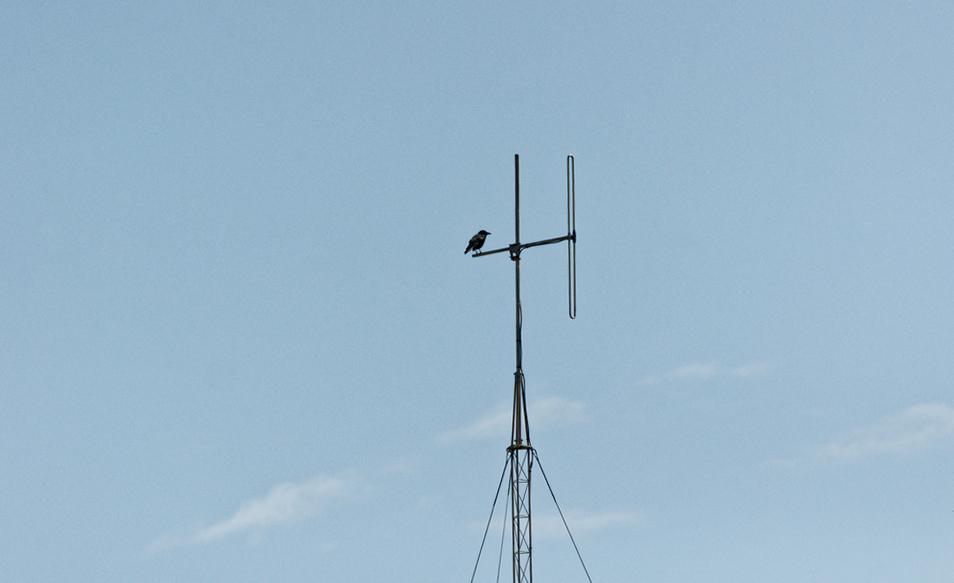 Radio corbeau ! Dsc_0253