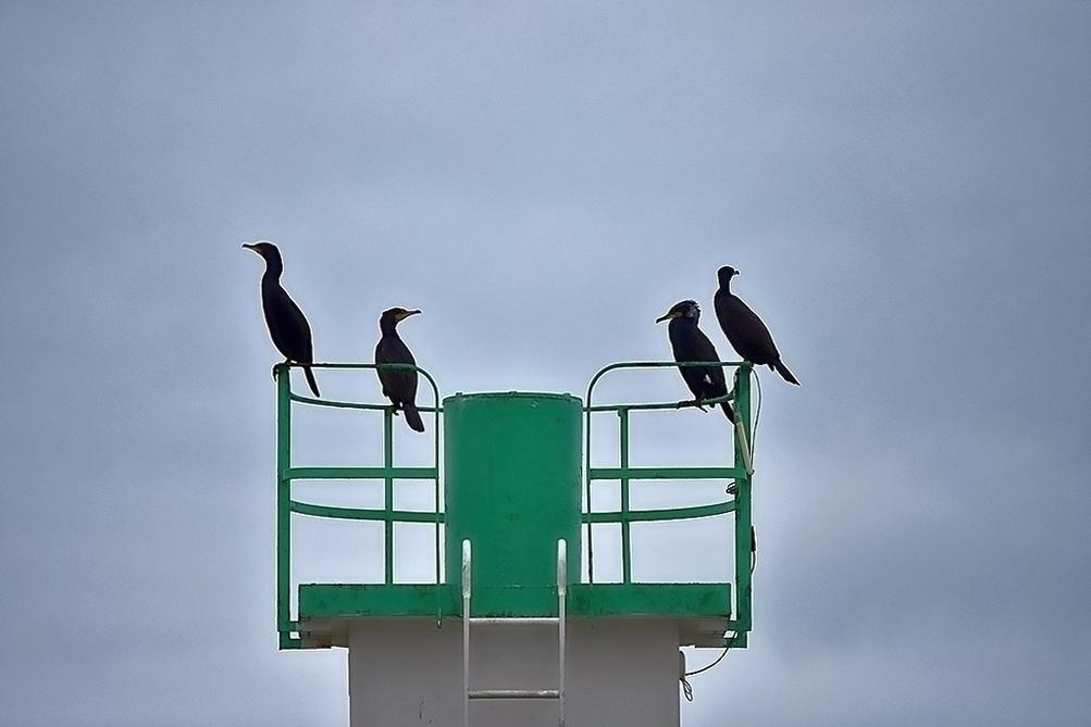 Cor (moran) de surveillance maritime ! Dsc_0410