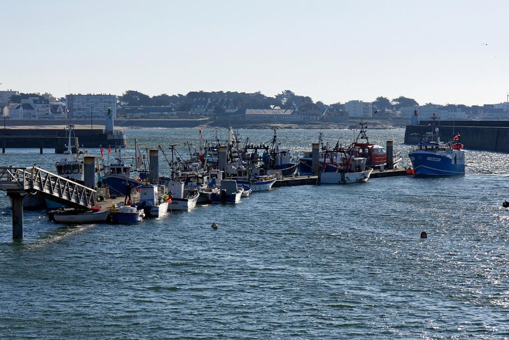 Confinement Quiberon Port Maria criée et quai des bateaux de pêches! Dsc_0734