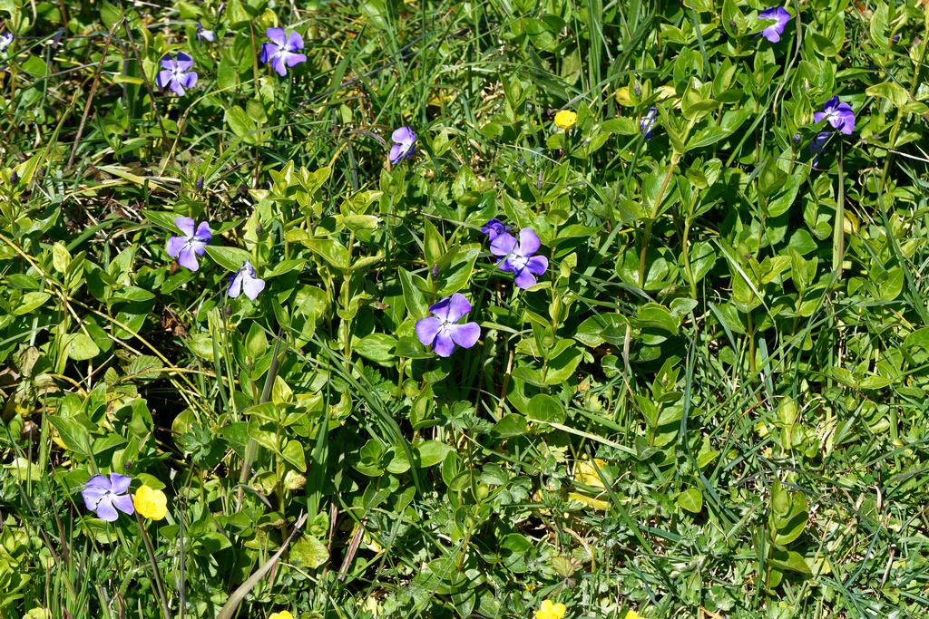 le printemps est bien là, la seve monte ! Dsc_0744