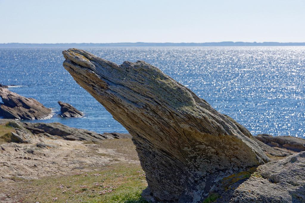 J'ai vu sur la côte Sauvage Alligator427.67 ! Dsc_0823